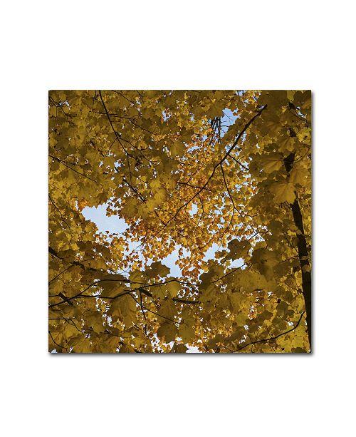 """Trademark Global Kurt Shaffer 'Golden Canopy of Autumn' Canvas Art - 18"""" x 18"""""""