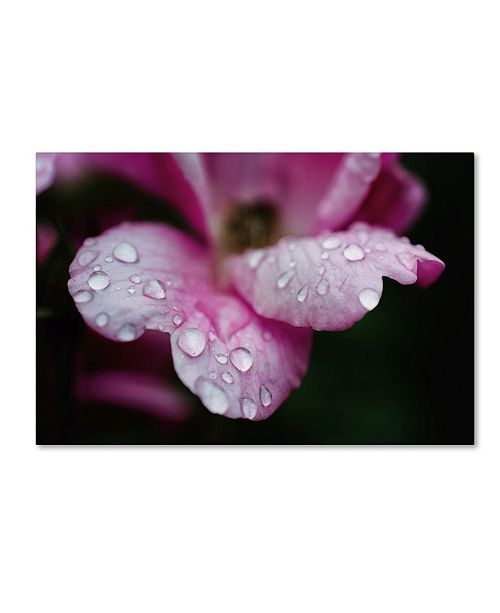"Trademark Global PIPA Fine Art 'Raindrops on Wild Rose Color' Canvas Art - 22"" x 32"""