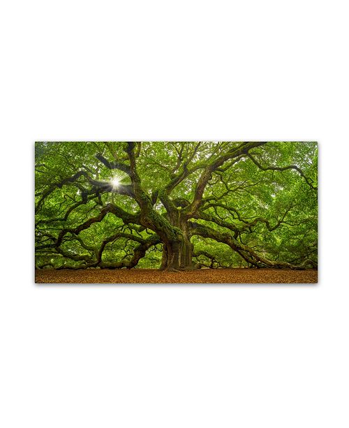 "Trademark Global Moises Levy 'The Tree 1 OL' Canvas Art - 24"" x 47"""