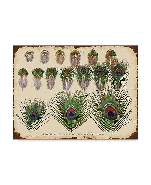 """Trademark Global Jean Plout 'Vintage Feather Study Green' Canvas Art - 35"""" x 47"""""""