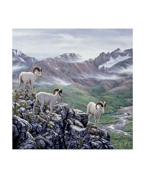 """Trademark Global Jeff Tift 'Dall Sheep At Denali' Canvas Art - 24"""" x 24"""""""