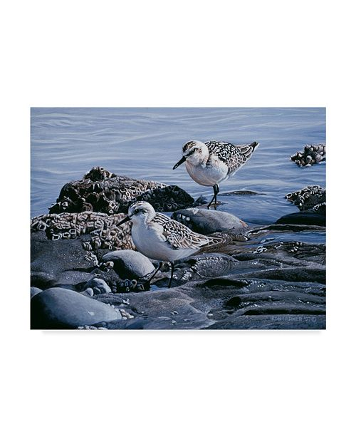 "Trademark Global Ron Parker 'Sanderlings' Canvas Art - 35"" x 47"""