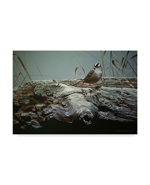 "Trademark Global Ron Parker 'Driftwood Bird' Canvas Art - 30"" x 47"""