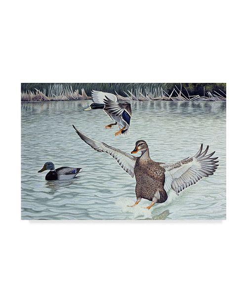 "Trademark Global Rusty Frentner 'Decoyed Ducks' Canvas Art - 22"" x 32"""