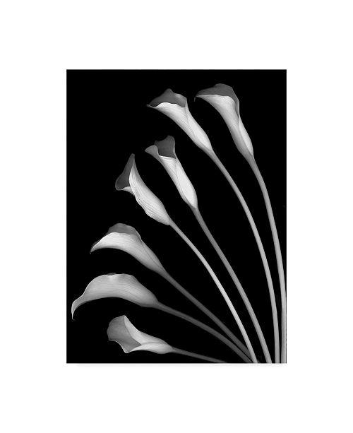 "Trademark Global Susan S. Barmon 'Crystal Blush Calla Lilies' Canvas Art - 35"" x 47"""