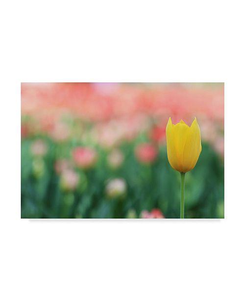 """Trademark Global Incredi 'Yellow Tulip' Canvas Art - 32"""" x 22"""""""