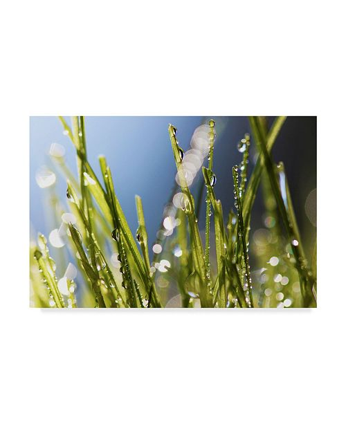 """Trademark Global Incredi 'Wet Grass' Canvas Art - 47"""" x 30"""""""