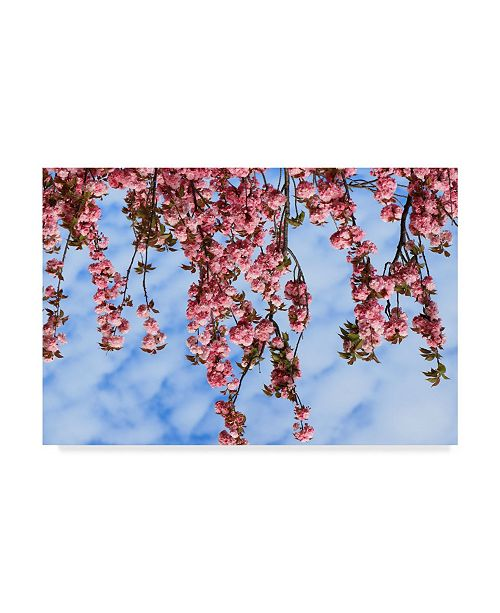 """Trademark Global Incredi 'Pink Flowers Over Frame' Canvas Art - 47"""" x 30"""""""