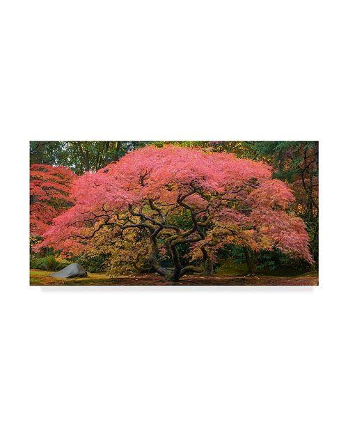 "Trademark Global Jason Matias 'Japanese Maple Tree Pink' Canvas Art - 32"" x 16"""