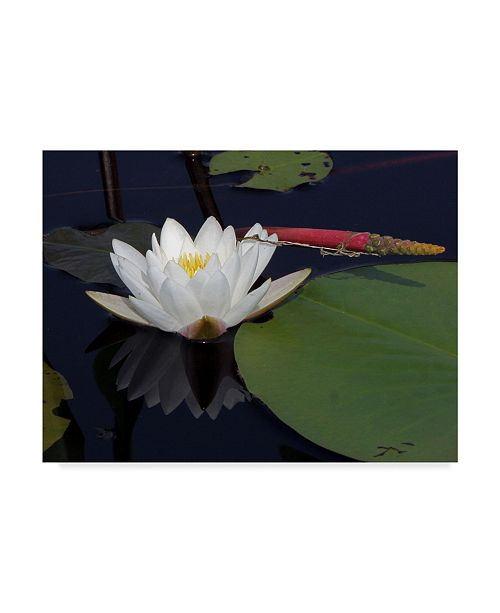 "Trademark Global J.D. Mcfarlan 'Okefenokee Lilly' Canvas Art - 47"" x 35"""