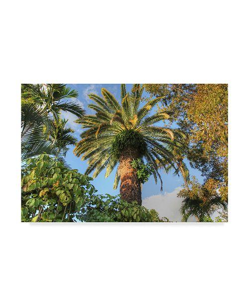 """Trademark Global Robert Goldwitz 'Giant Palm' Canvas Art - 47"""" x 30"""""""