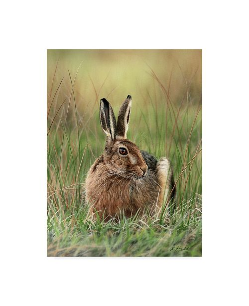 "Trademark Global Nigel Artingstall 'Brown Hare' Canvas Art - 35"" x 47"""