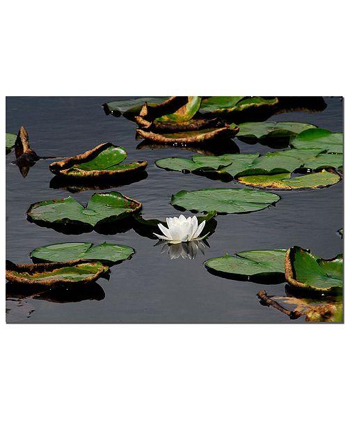 "Trademark Global White lily by Kurt shaffer Canvas Art - 32"" x 24"""