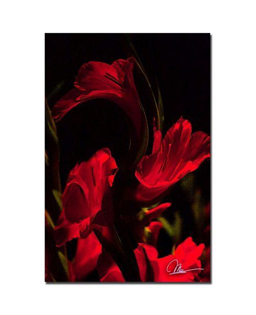 """Trademark Global Martha Guerra 'Gladiolus V' Canvas Art - 24"""" x 16"""""""