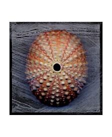 """John W. Golden 'Sea Urchin Blue' Canvas Art - 14"""" x 14"""""""