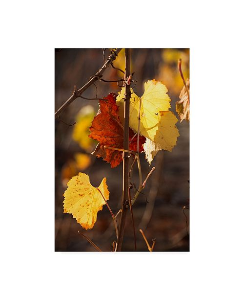 "Trademark Global Lance Kuehne 'Autumn Leaves' Canvas Art - 12"" x 19"""