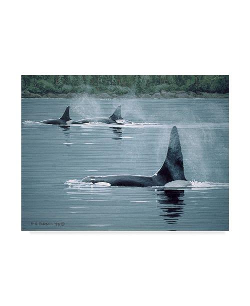 "Trademark Global Ron Parker 'Orcas' Canvas Art - 14"" x 19"""