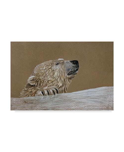 "Trademark Global Rusty Frentner 'Polar Bear' Canvas Art - 12"" x 19"""