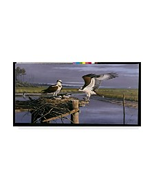 "Wilhelm Goebel 'Chesapeake Treasurers Osprey' Canvas Art - 12"" x 24"""