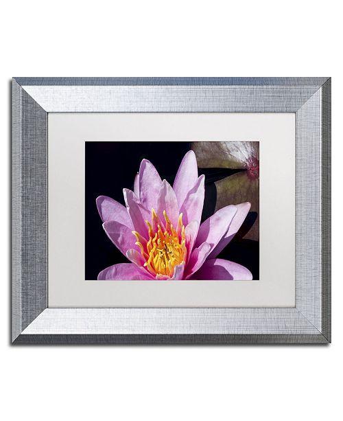 """Trademark Global Kurt Shaffer 'Pink Water Lily' Matted Framed Art - 11"""" x 14"""""""