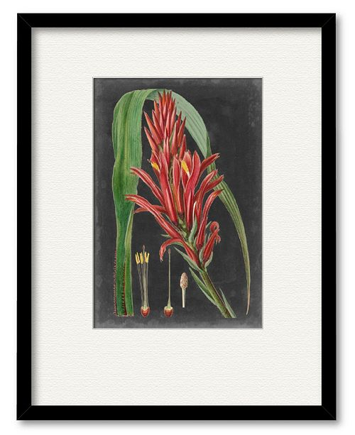 "Courtside Market Dramatic Tropicals II 16"" x 20"" Framed and Matted Art"