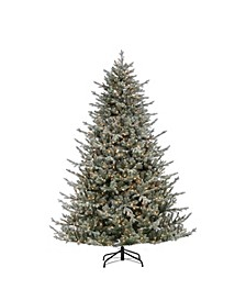 7.5Ft. Lightly Flocked Natural Cut Olympia Fir with 800 Clear Lights