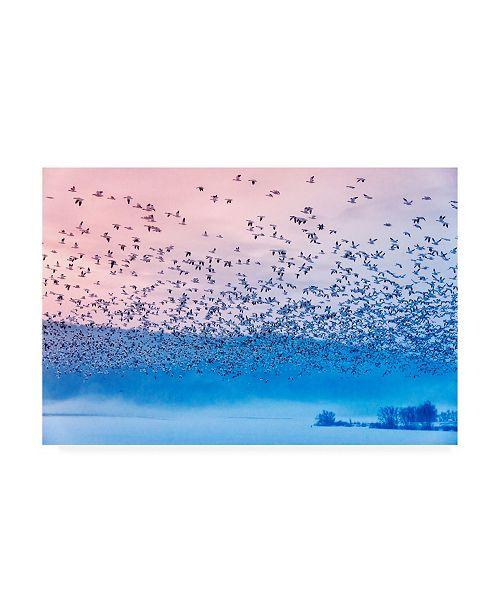 "Trademark Global Rob Li Flying in the Fogging Morning Canvas Art - 15"" x 20"""