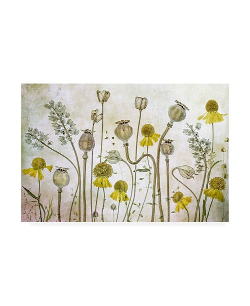"Trademark Global Mandy Disher Poppies and Helenium Canvas Art - 37"" x 49"""