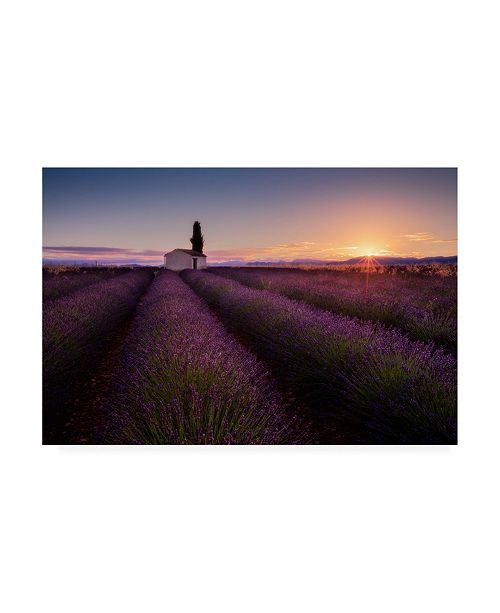 """Trademark Global Donald Luo Provence Lavender Canvas Art - 37"""" x 49"""""""