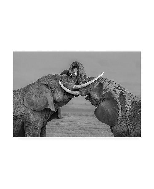 "Trademark Global Yun Wang Elephants Fighting Canvas Art - 20"" x 25"""