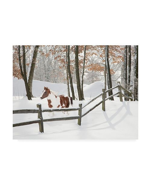 "Trademark Global Monte Nagler Athena in the Snow Farmington Hills Michigan Canvas Art - 37"" x 49"""