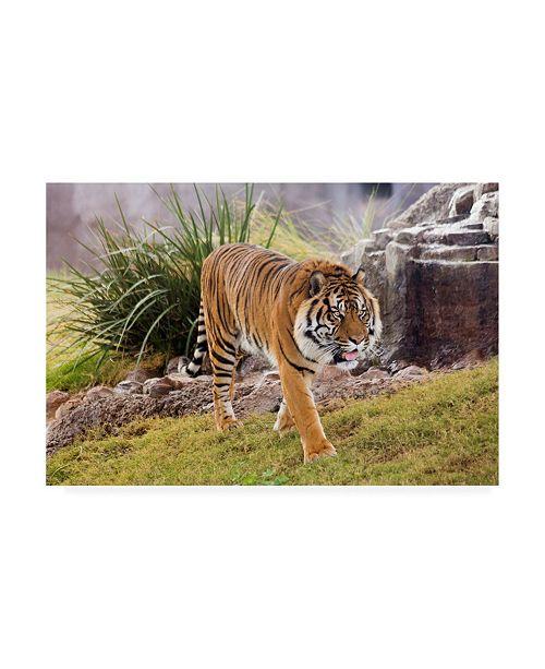 "Trademark Global Monte Nagler Arizona Color 2 Canvas Art - 20"" x 25"""