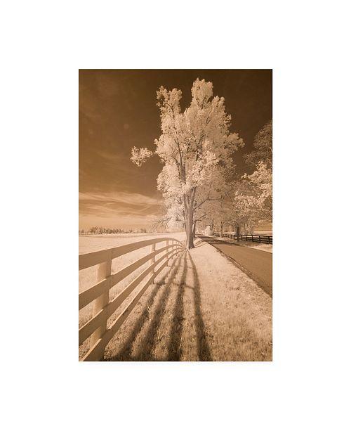 "Trademark Global Monte Nagler Fence Shadows and Trees Kentucky Canvas Art - 15"" x 20"""
