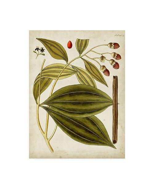 "Trademark Global Unknown Horticultural Specimen VI Canvas Art - 15.5"" x 21"""