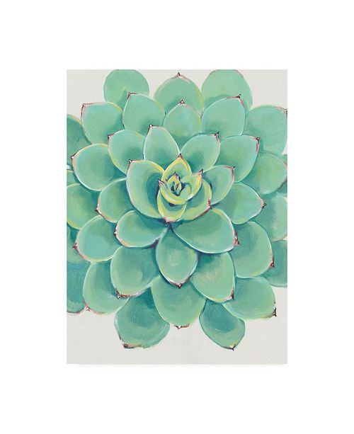 "Trademark Global Tim O'Toole Pastel Succulent III Canvas Art - 15.5"" x 21"""