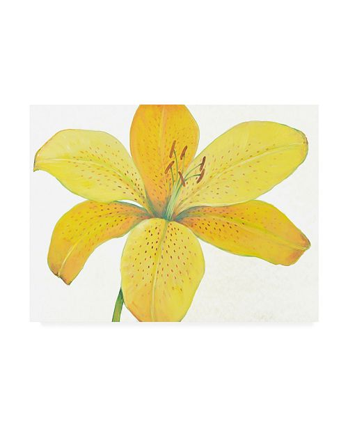 "Trademark Global Tim OToole Citron Tiger Lily II Canvas Art - 27"" x 33.5"""