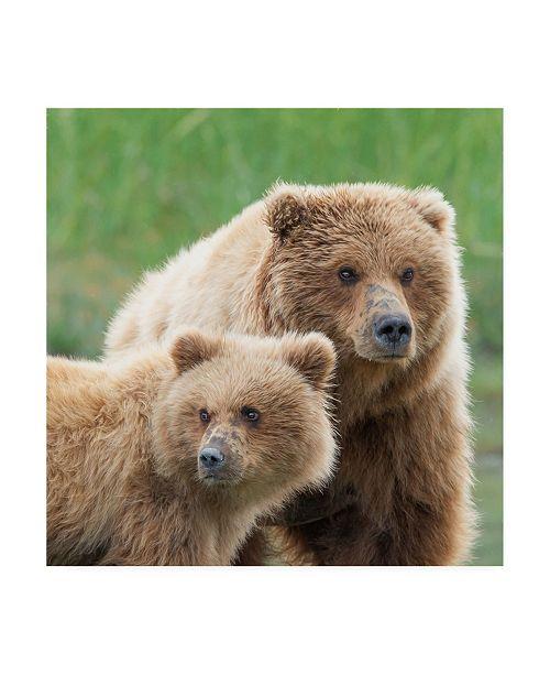 "Trademark Global PH Burchett Bear Life III Canvas Art - 15.5"" x 21"""