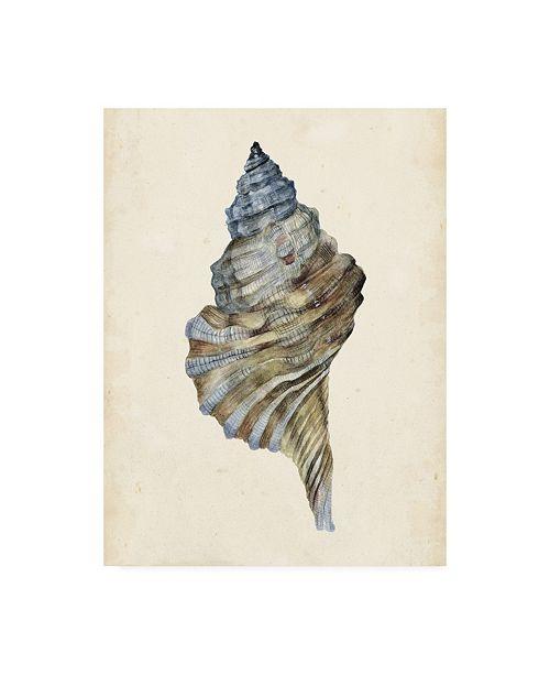 "Trademark Global Melissa Wang Watercolor Seashell III Canvas Art - 15.5"" x 21"""