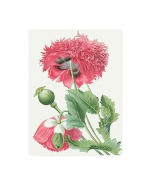 "Vision Studio Floral Beauty V Canvas Art - 36.5"" x 48"""