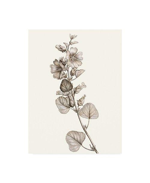 "Trademark Global Vision Studio Neutral Botanical Study I Canvas Art - 15.5"" x 21"""