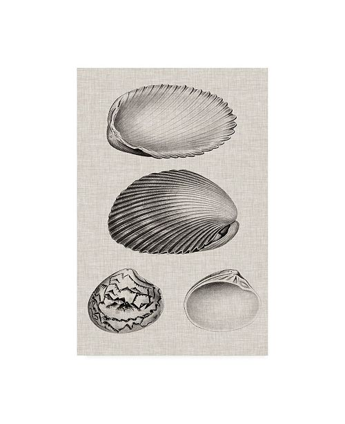 "Trademark Global Vision Studio Charcoal & Linen Shells VIII Canvas Art - 27"" x 33.5"""