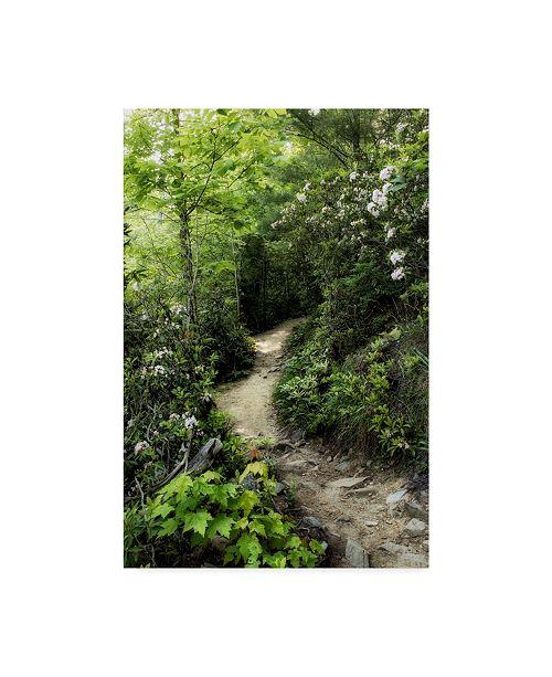 "Trademark Global Danny Head Mountain Trail Canvas Art - 37"" x 49"""