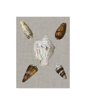 "Trademark Global Vision Studio Shells On Linen Ii Canvas Art - 37"" X 49"" In Multi"