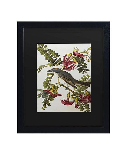 "Trademark Global John James Audubon Gray Tyrant Gray Kingbird Matted Framed Art - 15"" x 20"""