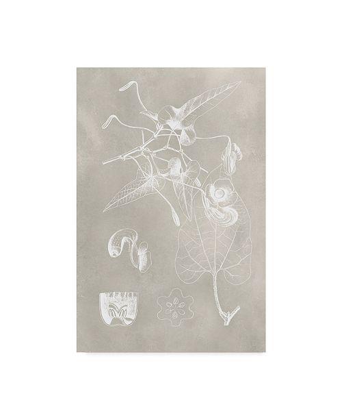 "Trademark Global Vision Studio Botanical Schematic I Canvas Art - 15"" x 20"""