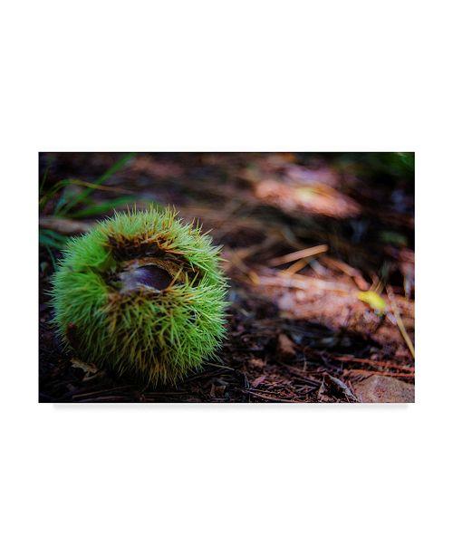 """Trademark Global Pixie Pics Grass Ball Canvas Art - 20"""" x 25"""""""