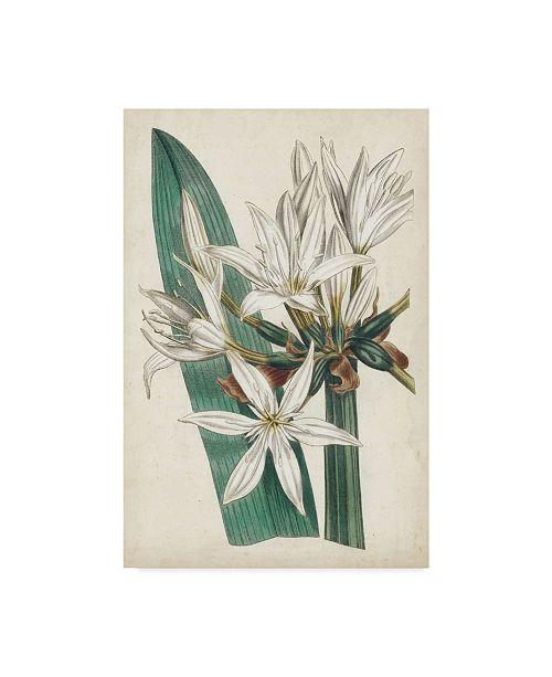 "Trademark Global Curtis Ivory Garden VI Canvas Art - 20"" x 25"""