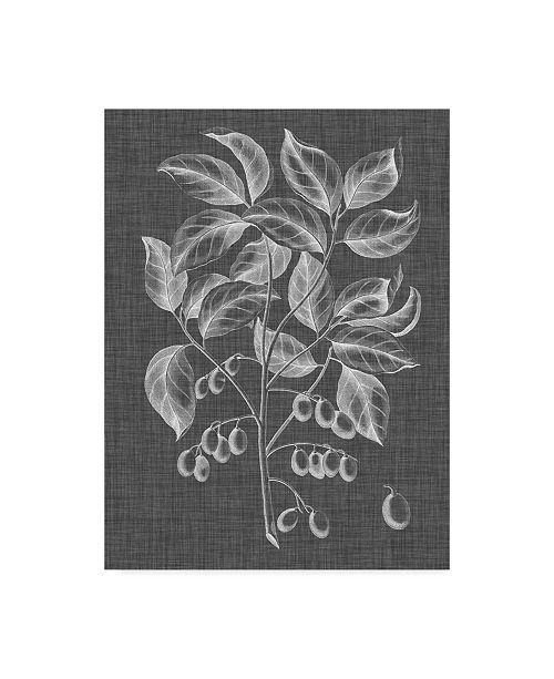 "Trademark Global Vision Studio Graphic Foliage V Canvas Art - 37"" x 49"""
