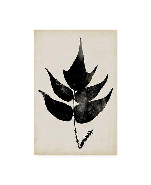 "Trademark Global Vision Studio Fern Silhouette IV Canvas Art - 20"" x 25"""