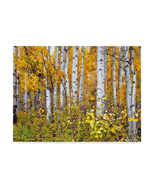 "Trademark Global David Drost Yellow Woods IV Canvas Art - 20"" x 25"""